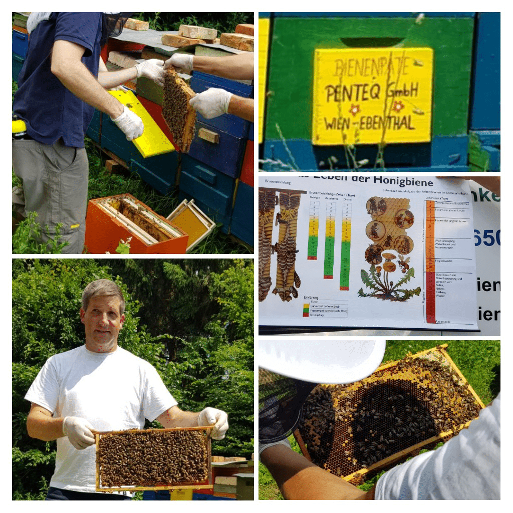 Collage des penteq Bienenstocks